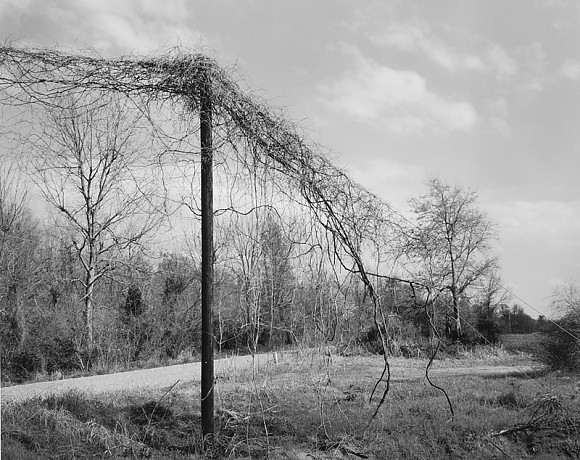 Kudzu On Pole - Benoit, MS   1999