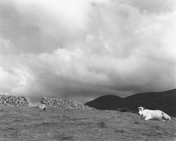 Cow On Hill - Recess, Co Galway Ireland 1993
