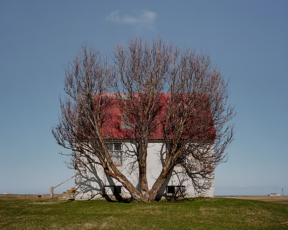 Tree And House